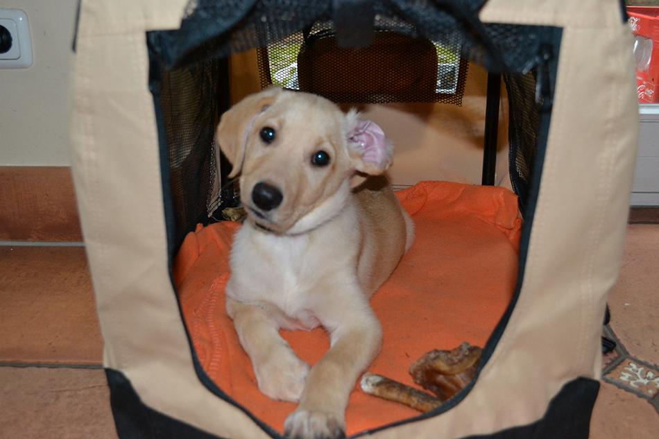 Welpenbox für Hunde
