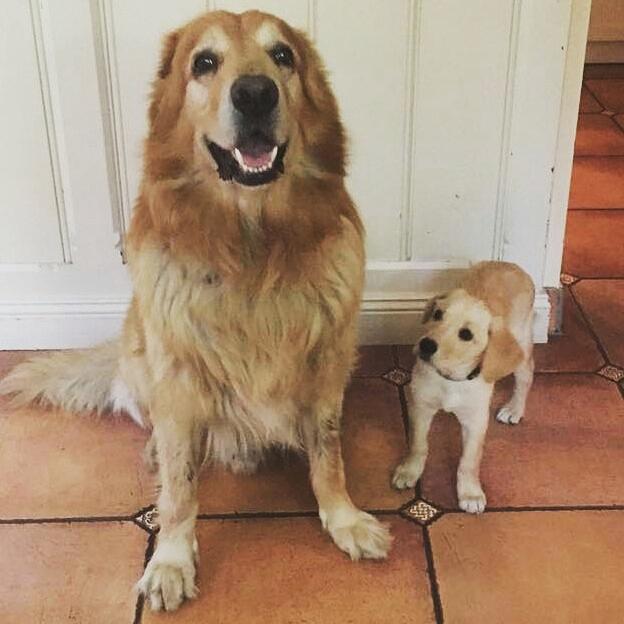 Großer Hund Anton und Heidi